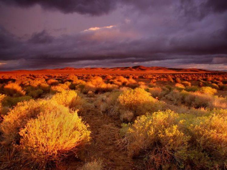 Antelope Valley Poppy Reserve in California17_exposure_resize