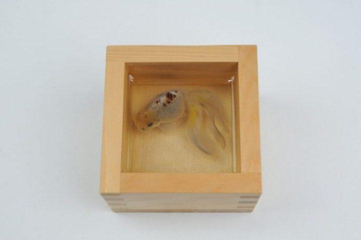 Kingyo-sake Yukihyou Japanese Cypress sake cup, resin, acrylic 2013