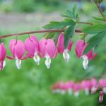 12 Most Unusual Adorable Flowers