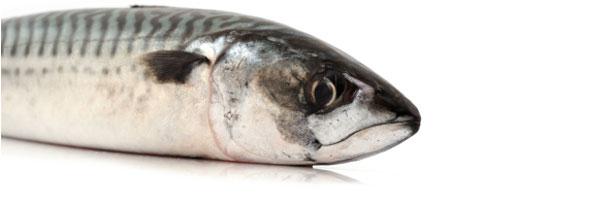oily-fish