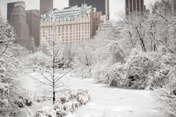 Wintery Wonderland of Central Park  6