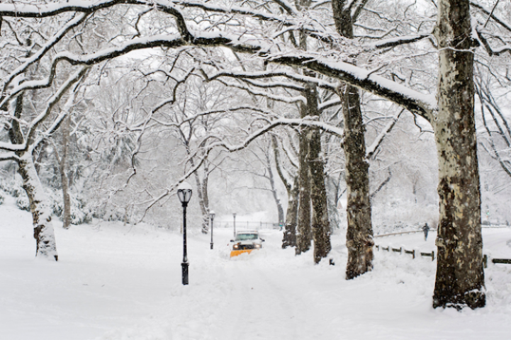 Wintery Wonderland of Central Park  7