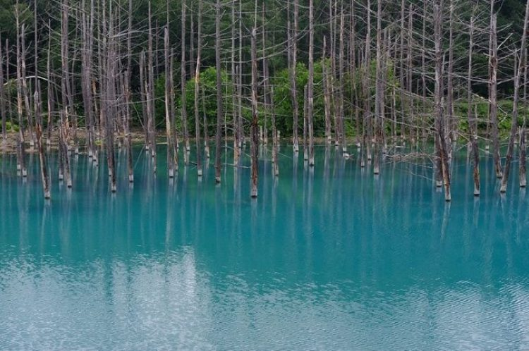 Blue Pond Haikkaido Japan11