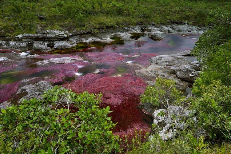 Cano Cristales a small river22
