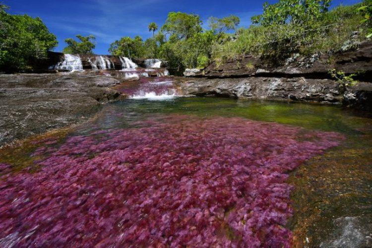Cano Cristales a small river27