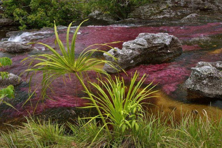 Cano Cristales a small river9