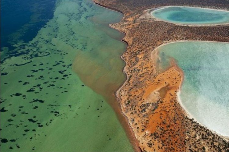 Gypsum Lakes or Birridas of Shark Bay4