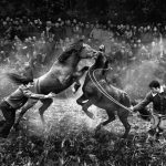 Traditional Horse Fighting of China