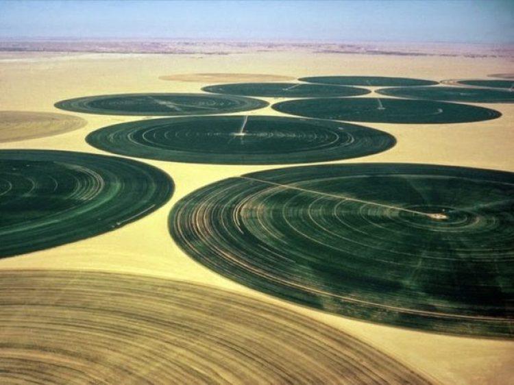 Organic Farming in the Desert of Wadi Rum2
