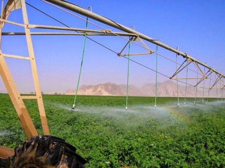 Organic Farming in the Desert of Wadi Rum4