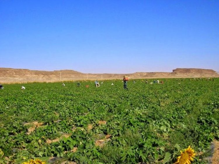 Organic Farming in the Desert of Wadi Rum6