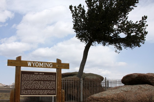 Peculiar Tree in the Rock of Wyoming3