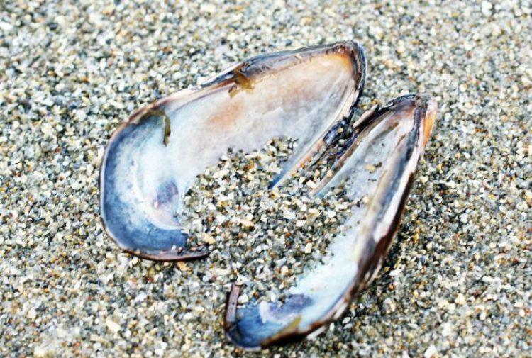 Sparkling Glass Beach of California 23