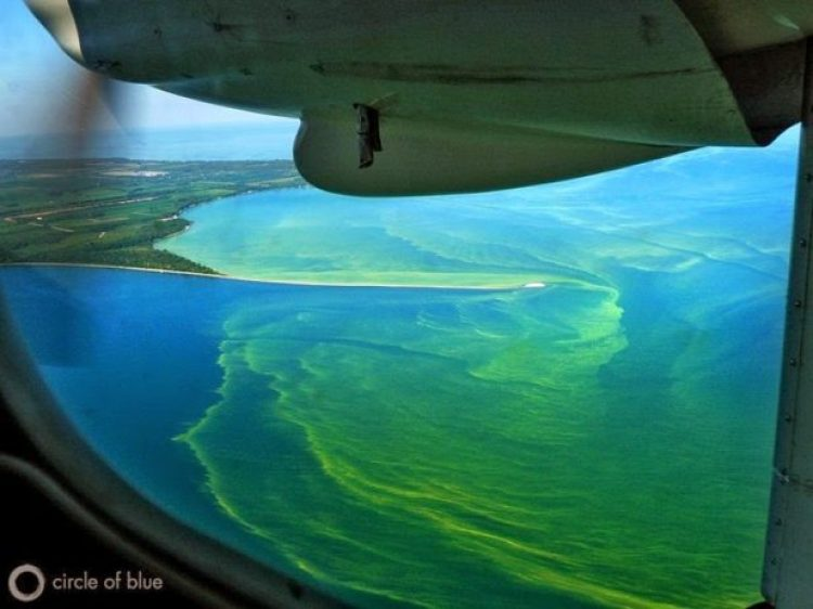 Toxic Algae Bloom on Lake Erie5