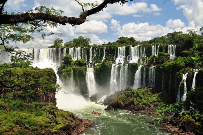 Image result for Plants and Flowers of Iguazú Falls