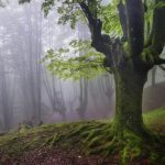 """""""Gorbea Natural Park"""" A Mystical Forest in Spain"""