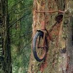 A Bike Chained To Tree