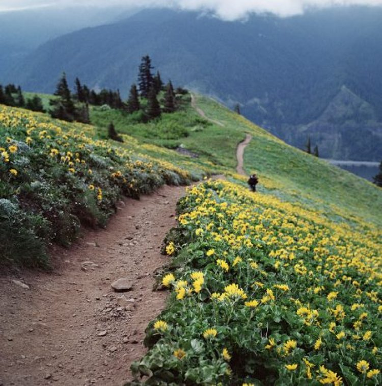 Spring In Dog Mountain, Washington, USA