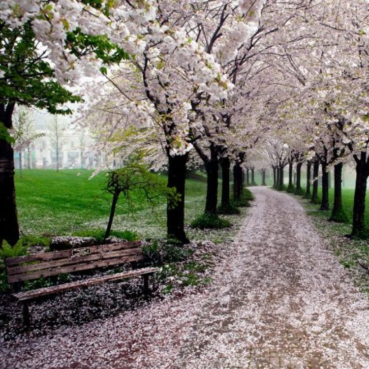 Spring In Spencer Smith Park, Burlington, Ontario, Canada