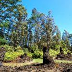 The Lava Tree State Park Hawaii United States