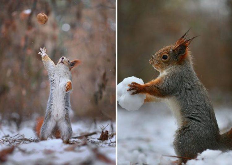 squirrel-photography-russia-vadim-trunov-17