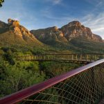 The Kirstenbosch Centenary Tree Canopy Walkway in Cape Town