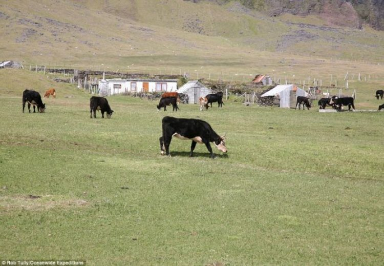 All of the local families are farmers of some kind, with cattle among the livestock, though fishing is also a massive part of their economy