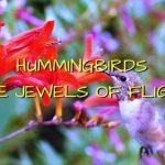 Hummingbirds: The Little Jewels of Flight 2