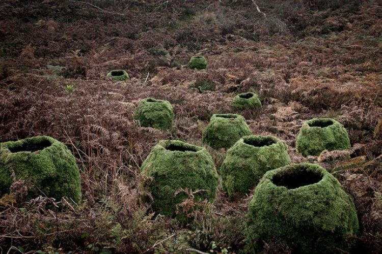 surreal-forest-photograhy-ellie-davis-14__880