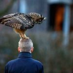 Naughty Dutch Owl Loves to Land on the Head of Local Residents