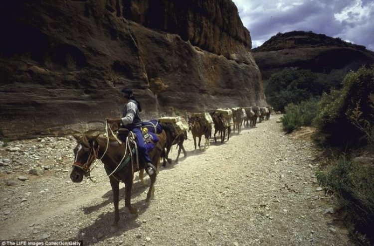 The country's last mule mail-train makes its daily 16-mile round-trip through the Grand Canyon to the Native American village of Supai