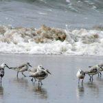 The world of sandy Beach