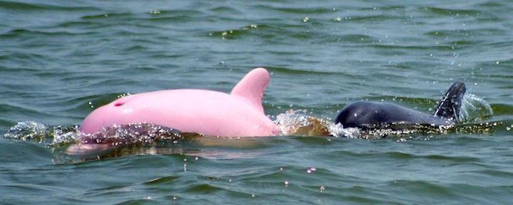 Pinky1