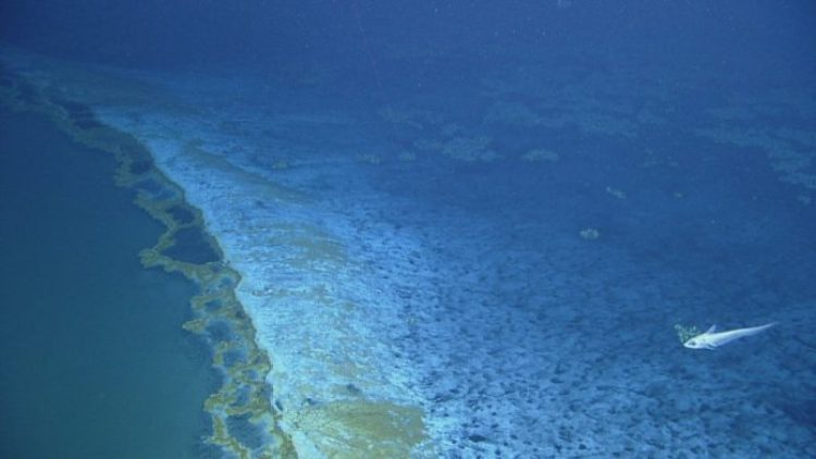 The brine pool has its own shoreline, with minerals seeping over the edge and cascading down its sides -