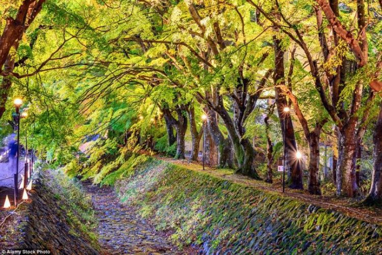 Tunnel of Maple Trees, Lake Kawaguchiko, Japan