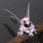 The Strange Poodle Moth