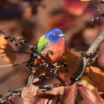 Exceptionally Rare Multicolored Bird Sighting in New York Attracts Crowds of Avian Enthusiasts