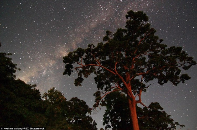The night sky as seen on the Andaman and Nicobar islands. Far from the crowds and city lights, a universe of stars show up brightly