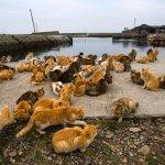 Tashirojima: Japan's Cat Island