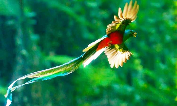 The quetzal skin is very thin and effortlessly torn, so it has evolved thick plumage to protect its skin.