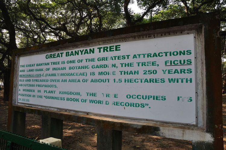 The great banyan tree has drawing ever increasing visitors to the garden than its collection of exotic plants from five continents.