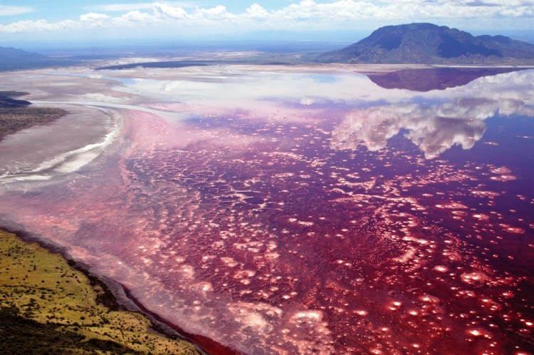 The Lake Natron is a salt and soda lake in the Arusha Region of Northern Tanzania, close to Kenyan Border in Gregory Rift.