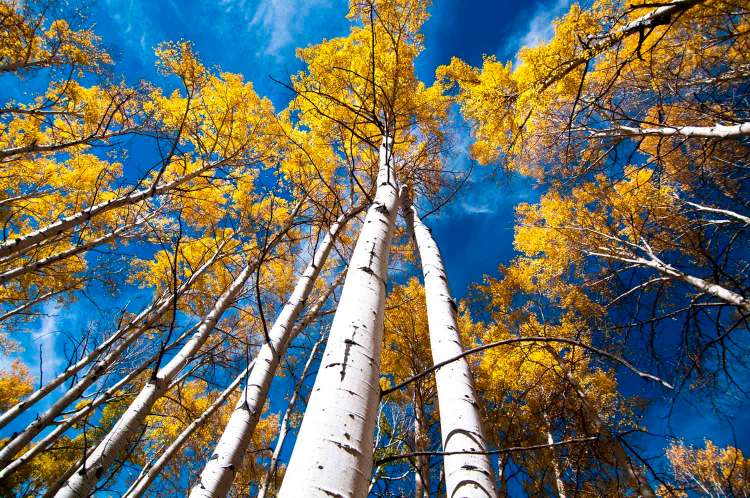 The Pando aspen clone in Utah is hard to guess age and long-term research would have had to begin when humans were starting to emigrate out of Africa.