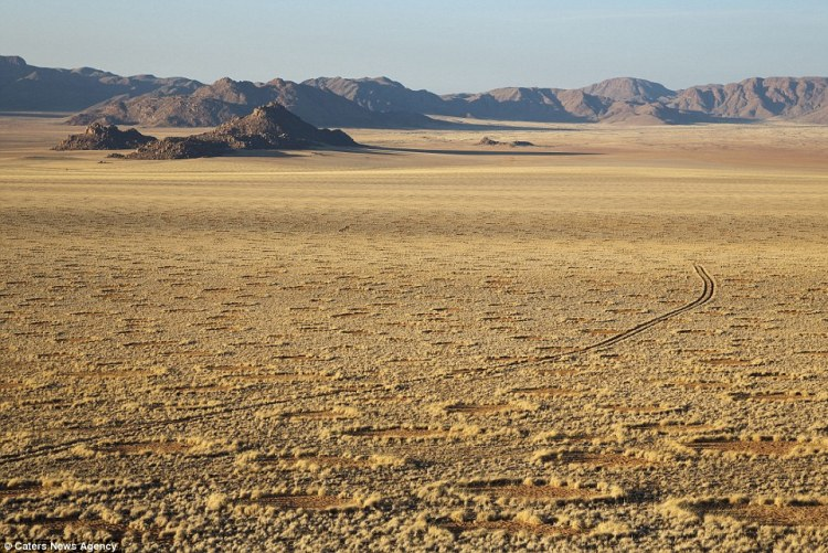 While some have suggested the rings are created by UFOs on the surface of a Namib desert .