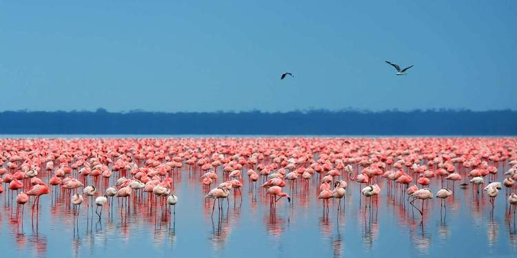 The lake's abundance of algae used to attract a massive myriad quantity of flamingos that famously lined the shore.