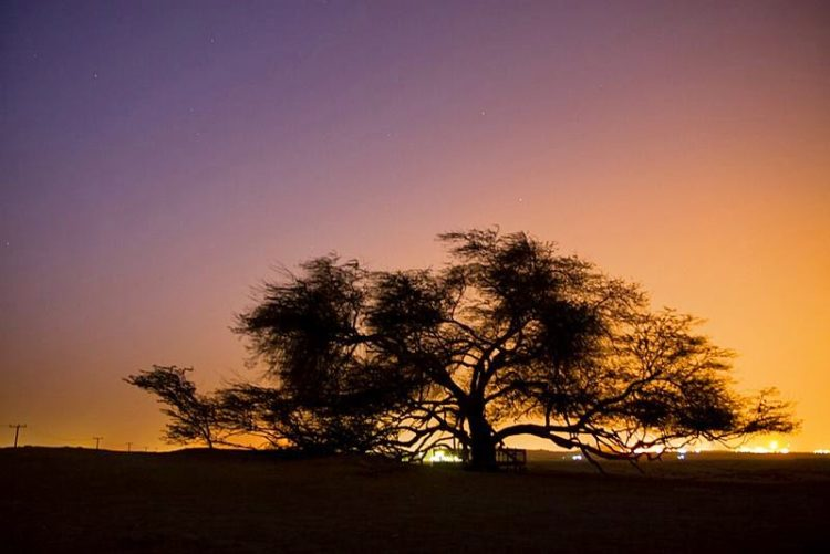 The tree stands on a hill in the Arabian Desert surrounded by miles of sand. Image credit Alex Europa