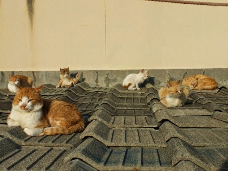 It is impossible to see so many cats in one place, different breed's just fickle nature of cats. Image credit Hal Arai