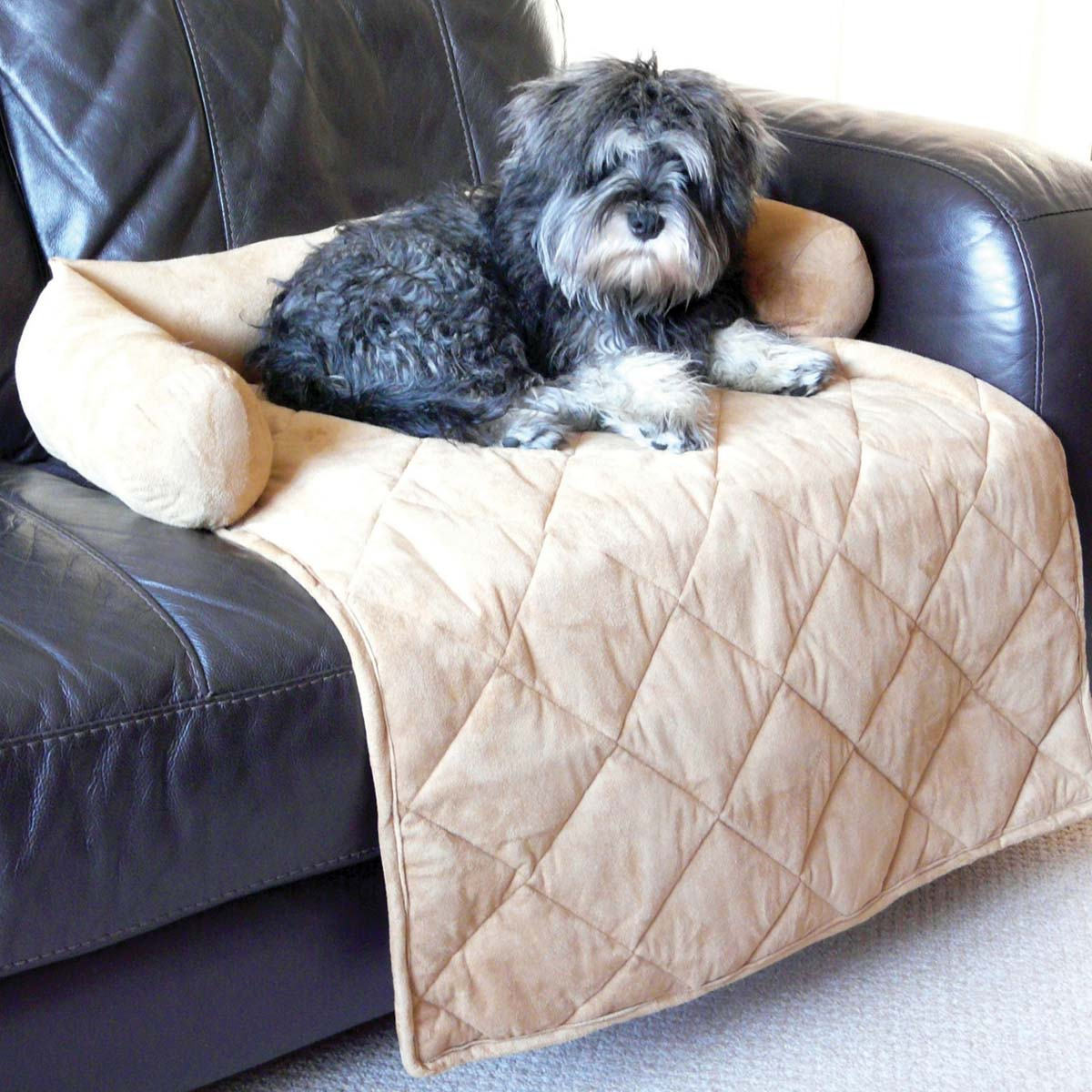 sofas for dogs uk john lewis leather and chairs the 10 best charity products your dog