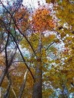 Autumn Tree and Sky