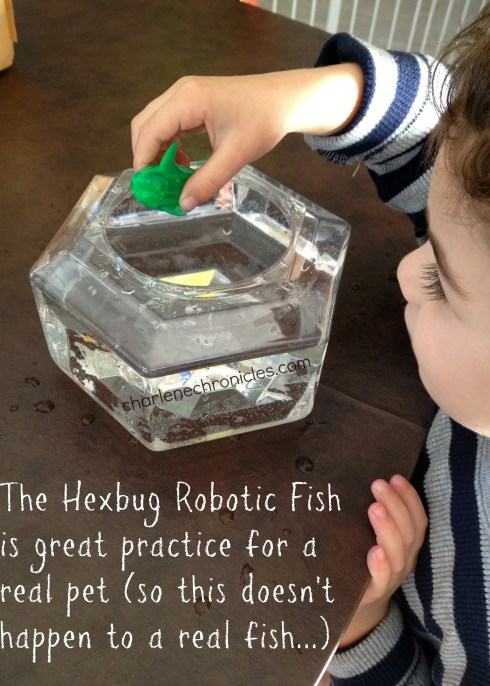 robotic fish with bowl
